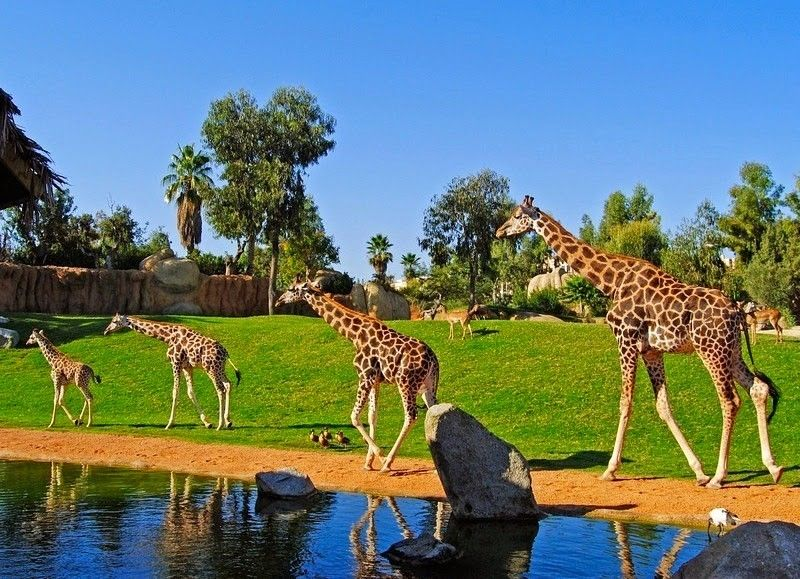 Bioparc-Valencia-Zoo-in-Valencia-Spain-3
