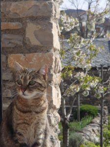 Pyrénées Orientales chat HomeExchange