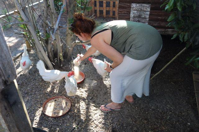 S'occuper du jardin et des poules en Afrique du Sud