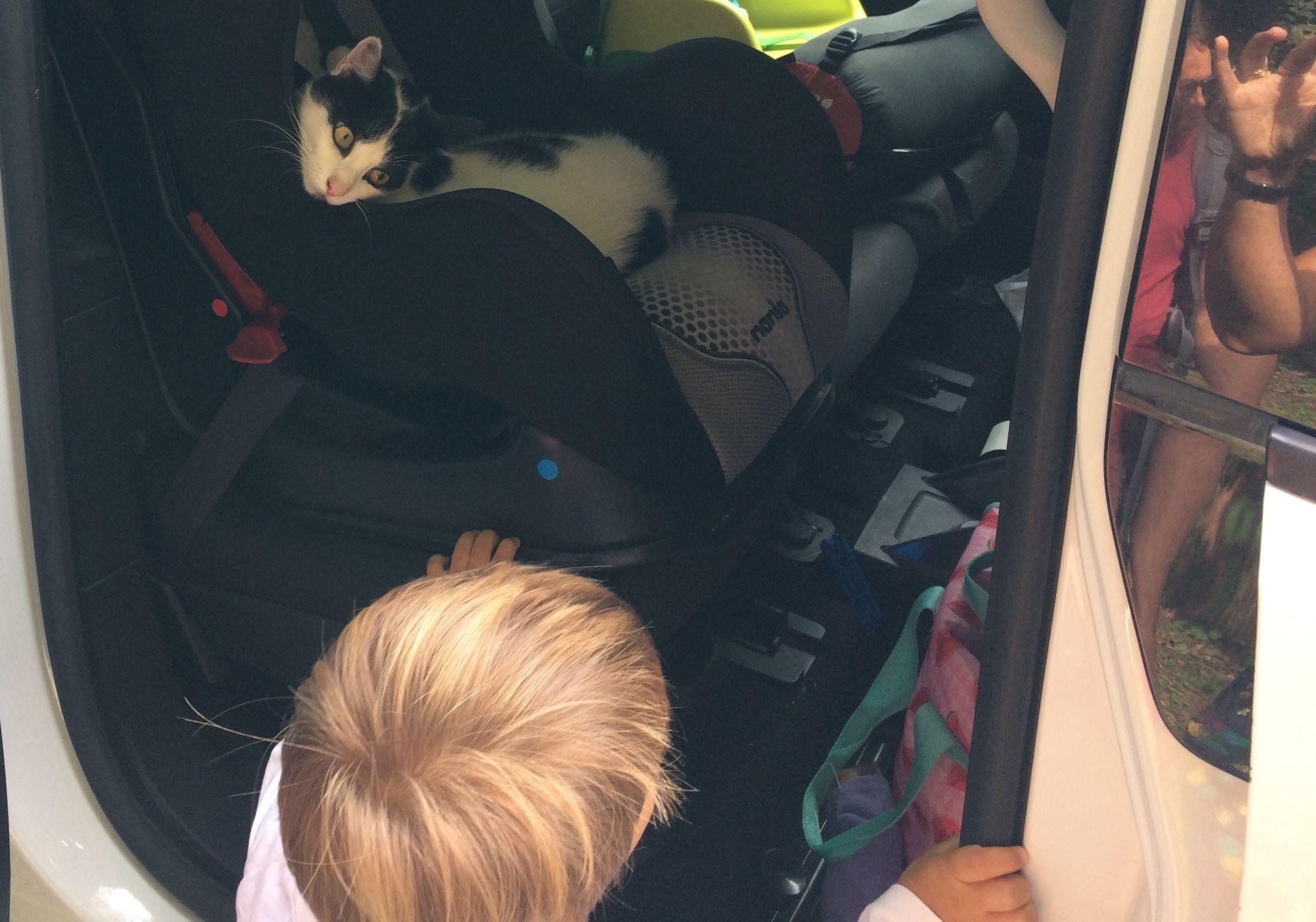 Léon s'est mis debout pour la première fois pour caresser le chat