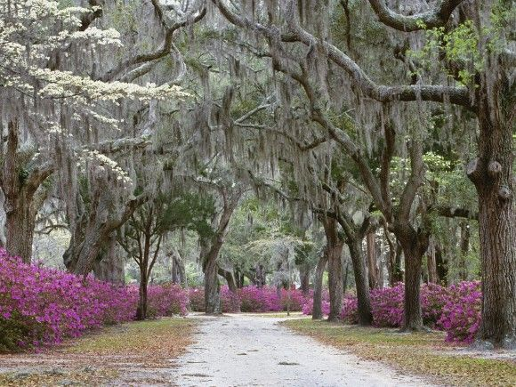Springtime-in-Savannah-Georgia-lieux-tournage-cinema-echange-de-maison