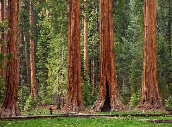 sequoia-national-park-top8-parc-nationaux-etats-unis