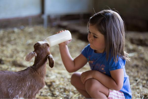 enfant-animaux-partage-echange-de-maison-en-famille