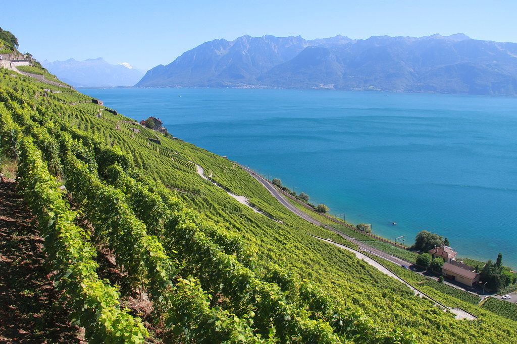lavaux-suisse-vignes-vignobles-vacances-été indien-echange de maison