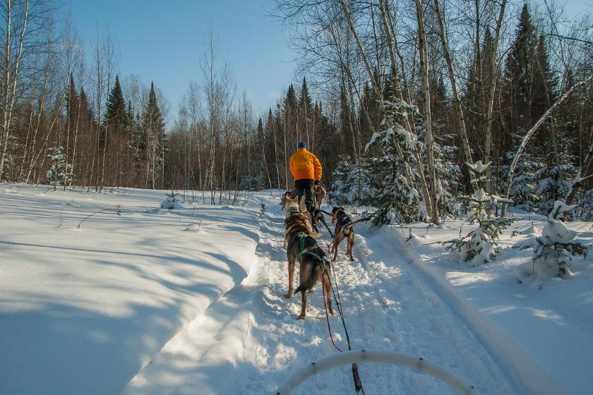 Montagne-hiver-chiens-de-traineaux
