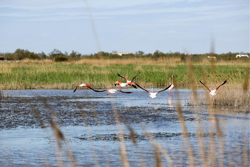 Camargue-paysage-oiseaux