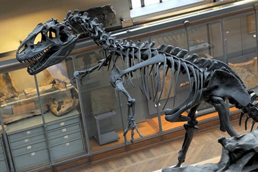 Nimes-musee-histoire-naturelle