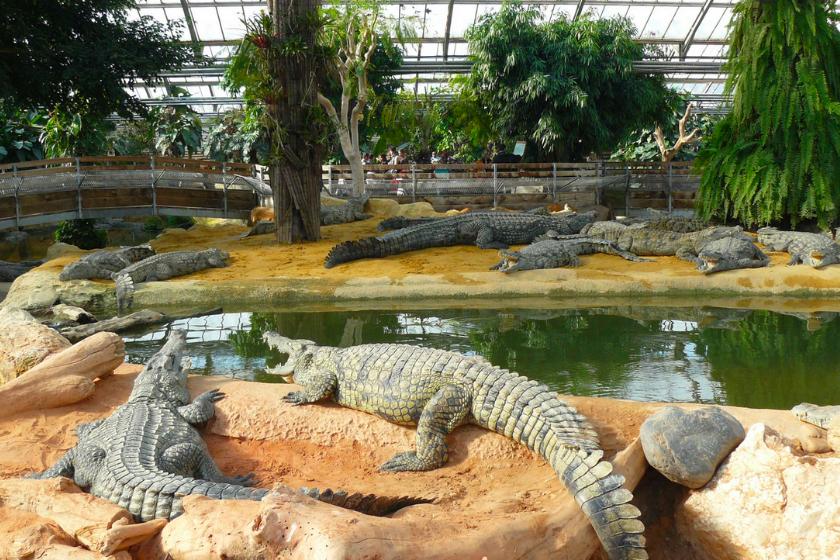 Pierrelate-ferme-aux-crocodiles
